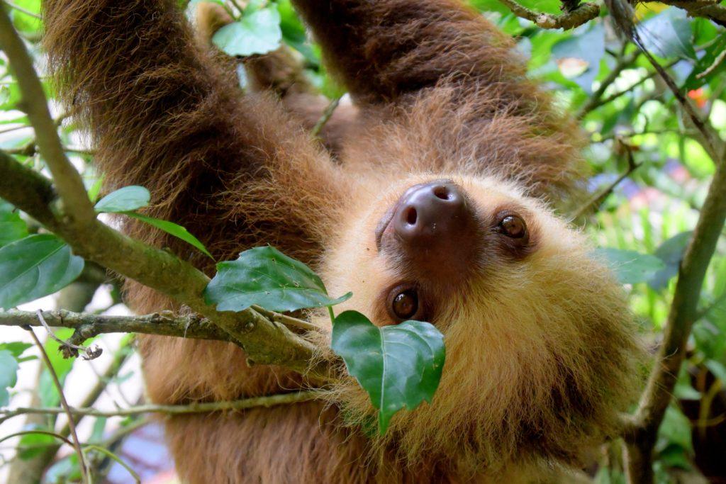 sloth-1879999-1024x683
