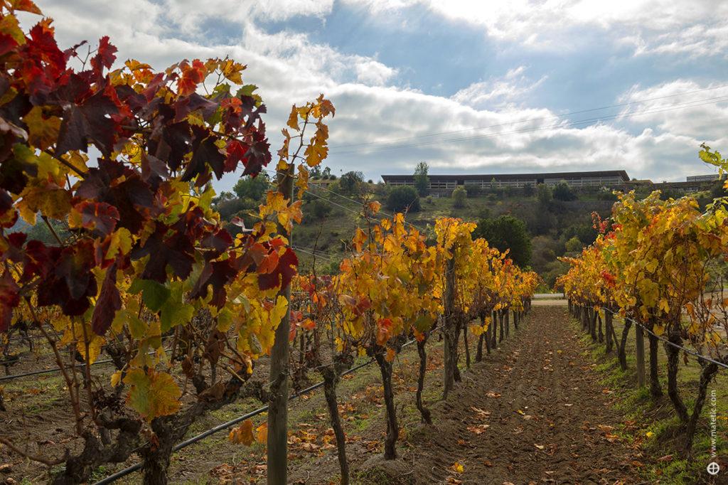 Vineyard-Wine-Cellar-1024x682